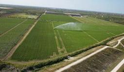 Danezii cumpara mii de hectare de teren in Romania