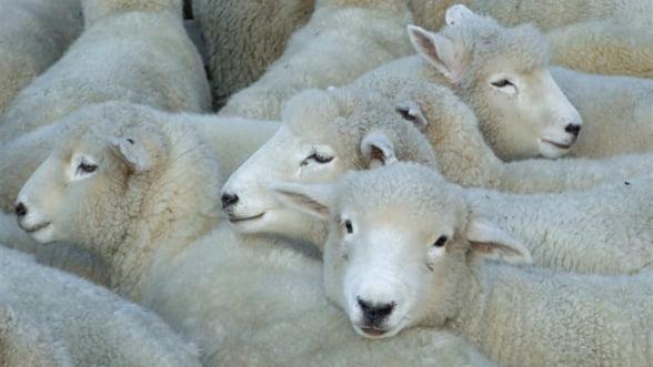Deblocarea exporturilor de carne catre Rusia, posibila peste cateva luni