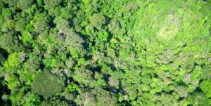 Defrisarea padurii amazoniene din Brazilia este la cel mai inalt nivel din ultimii 10 ani