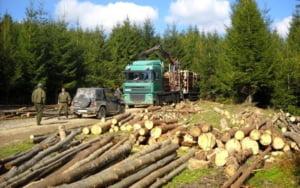 Dosarul DIICOT distrus complet de excluderea interceptarilor SRI. Un inginer silvic si alte doua persoane implicate in exploatari ilegale de lemn au fost achitate