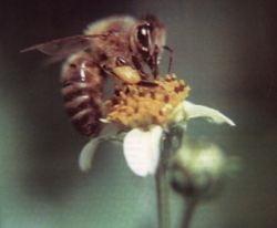 Doua milioane de euro fonduri europene pentru apicultorii romani