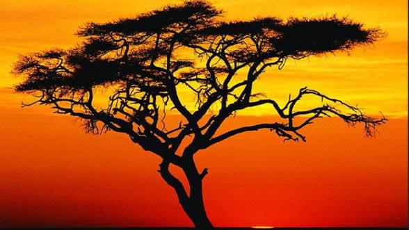 Economia Africii ia avant. Care sunt provocarile care stau in calea dezvoltarii