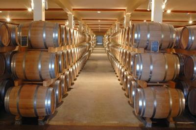 Efect inedit al incalzirii globale: tarile nordice produc tot mai mult vin