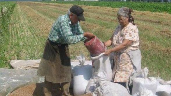 Efectele superproductiei de cereale asupra economiei din Romania