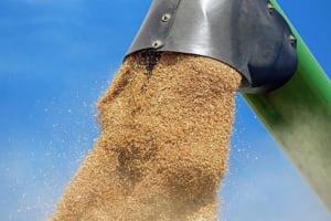 Egiptul a refuzat 63.000 de tone de grau din Romania din cauza unei ciuperci: E o catastrofa!