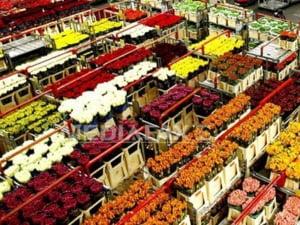 Europarlamentari olandezi: Oprirea tirurilor cu flori este santaj