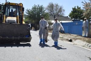 Explozie de pesta in Bihor: Peste 40 de focare noi confirmate in doar cateva zile