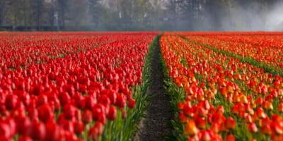 Exporturile Olandei au ajuns la un maxim istoric de 94,5 miliarde euro