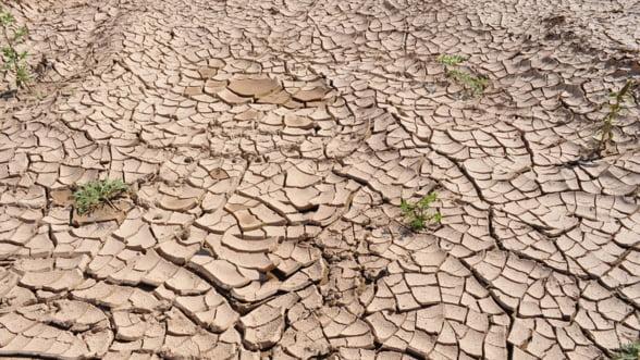 Fermierii danezi se asteapta la noi pierderi si falimente din cauza secetei