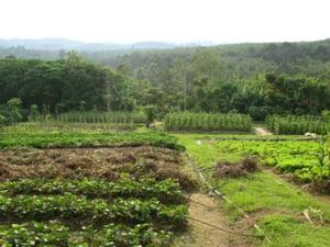 Fermierii eco au primit 2,1 mil. euro