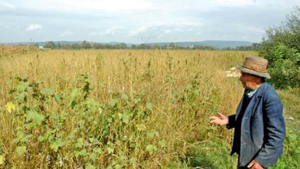 Fermierii primesc un avans din platile europene pe suprafata, incepand de marti