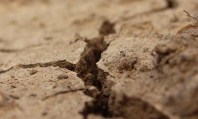 Fermierii suedezi se confrunta cu o seceta fara precedent