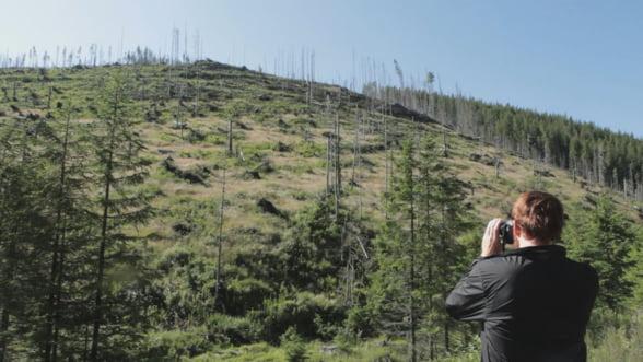 Film despre taierile ilegale de paduri din Romania, in premiera la Copenhaga