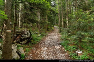 Fondul forestier national a crescut anul trecut usor, la 6.494.728 hectare