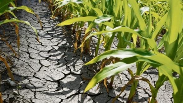 Fondul pentru Preluarea Pierderilor in Agricultura, operational din 30 iunie 2013