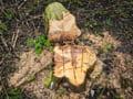 Forestierii avertizeaza ca exportul gazelor naturale va lasa populatia fara alternative la incalzirea cu lemne