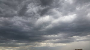 Furtuna din Bucuresti a doborat zeci de copaci. Doua persoane au ajuns la spital