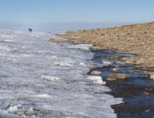 Gheata se retrage rapid din zona arctica si iese la iveala un peisaj nevazut de 120.000 de ani. Au inceput sa creasca si plante!