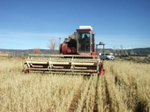 Guvernul acorda 779 milioane lei pentru agricultura