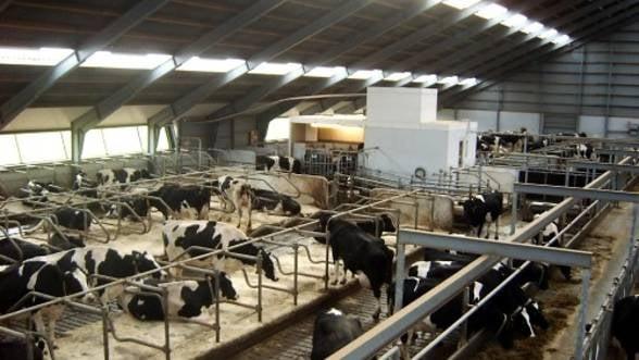 Importurile de lapte au ajuns la o treime din piata dupa o crestere de 60% anul trecut