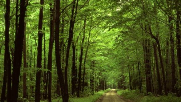 Interes crescut pentru terenurile agricole si forestiere din Romania