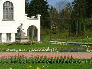 Intoarce-te la origini, alege Cluj