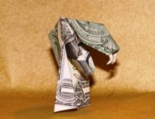 Investeste in fermele de vipere: Profit de minim 12.000 euro anual