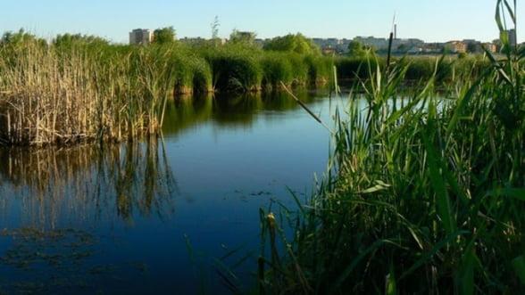 Lacul Vacaresti are avizul pentru a fi arie protejata, ramane problema proprietatii