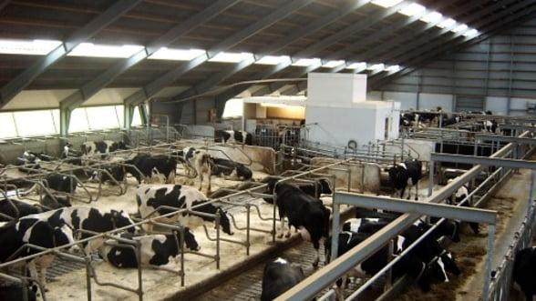Laptele colectat de vaca a scazut cu 4,1% in primele sapte luni ale anului