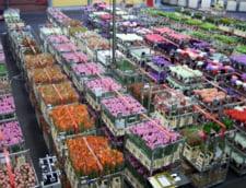 MADR monitorizeaza transporturile de flori