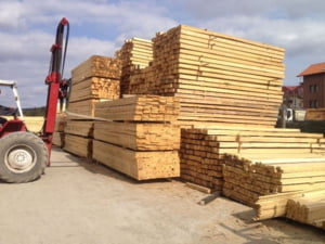 Mafia lemnului din Apuseni: structura piramidala bazata pe relatii de rudenie. Cum functioneaza grupul infractional organizat