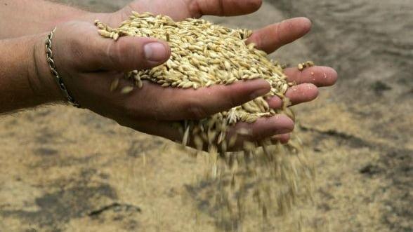 Mascatii au descins acasa la samsarii de cereale din Constanta si Calarasi