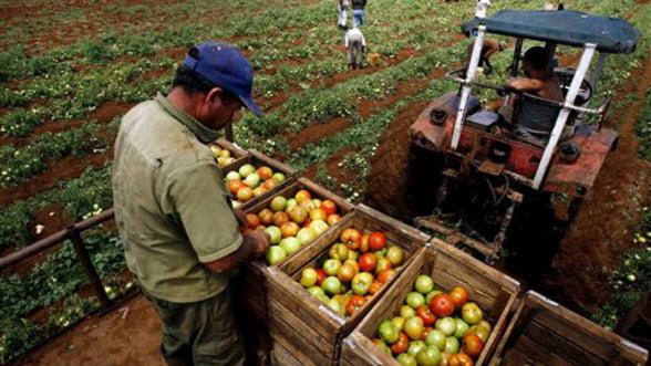 Ministerul Agriculturii aloca 2,7 miliarde lei pentru decontarea subventiilor pe suprafata