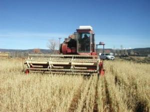 Ministerul Agriculturii va plati ajutoare de stat in valoare de 161,96 milioane lei