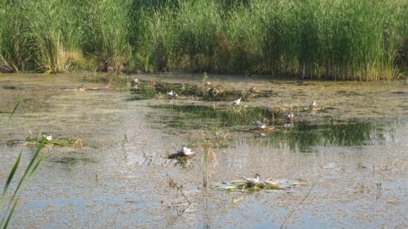 Ministerul Mediului va declara Delta Vacaresti din Bucuresti arie protejata