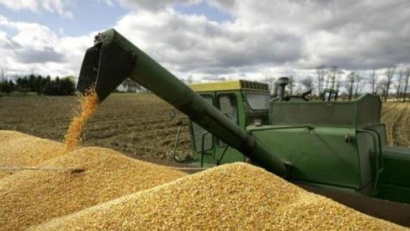 Ministrul Agriculturii: Productia de grau scade cu 15% in 2012