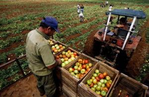 Ministrul Agriculturii: Sunt ferme de sute de hectare care nu contribuie la bugetul de stat
