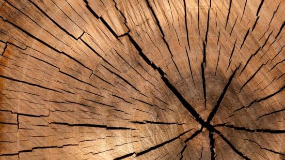 Ministrul Mediului: In Romania, se taie neautorizat aproximativ 38,6 milioane mc de lemn intr-un an