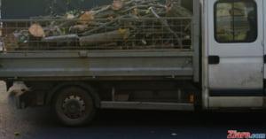 Ministrul Mediului: Transporturile de lemne vor fi monitorizate prin GPS, iar traseul fiecarui arbore va fi urmarit