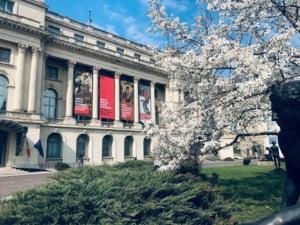 Muzeul National de Arta si Muzeul Colectiilor se redeschid miercuri: Ce reguli trebuie respectate
