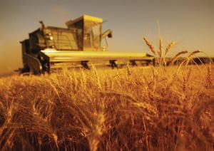 Nici terenurile agricole nu scapa de criza: achizitiile realizate de straini sunt la un sfert fata de anul trecut