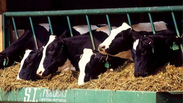 Nicio veste buna pentru fermieri: CE crede ca pretul laptelui e rezonabil