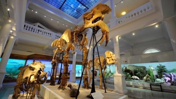 Noaptea Muzeelor: Ce vizitezi in Bucuresti