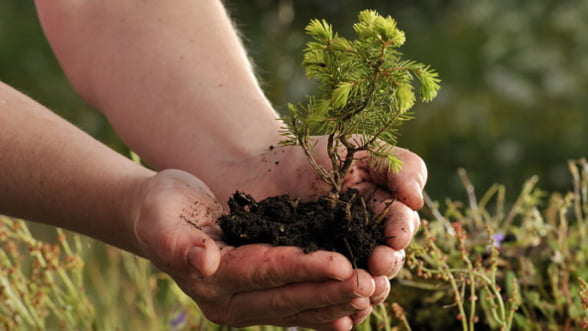 Norvegienii ne dau bani pentru dezvoltarea industriei verzi