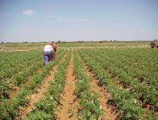 Numarul politelor de asigurari agricole s-a injumatatit in 2009