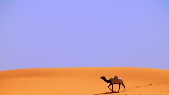 O catastrofa pandeste Arabia Saudita: E mai grav decat prabusirea pretului la petrol!