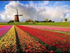 Olanda vrea sa stie de ce am blocat importurile de flori