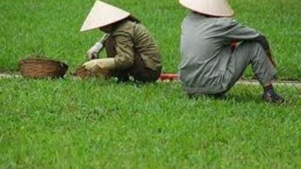 Pamantul Chinei, prea poluat pentru a fi cultivat