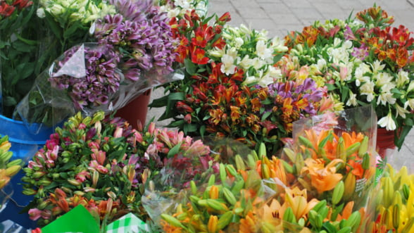 Piata de flori din Romania scade in 2013