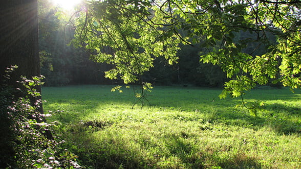 Ponta: Parcurile si spatiile verzi nu se retrocedeaza in nicio varianta